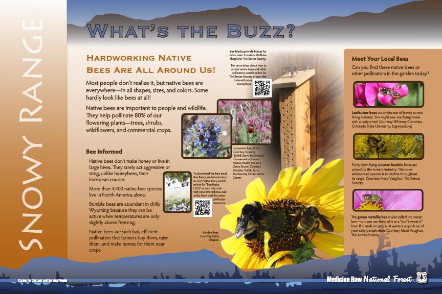 Pollinator_panel_B_101_outlines
