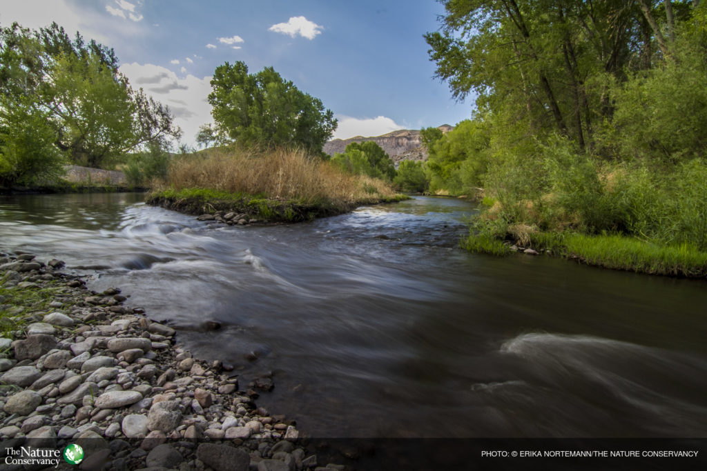 (ALL RIGHTS) May 2013. The Gila River, the last of the Southwest's major free-flowing rivers, runs through Grant County, New Mexico. The Conservancy's Gila Riparian Preserve protects more than 1,200 acres of the Southwest's fragile riparian habitat and the verdant gallery woodland along the river. Photo credit: © Erika Nortemann/TNC
